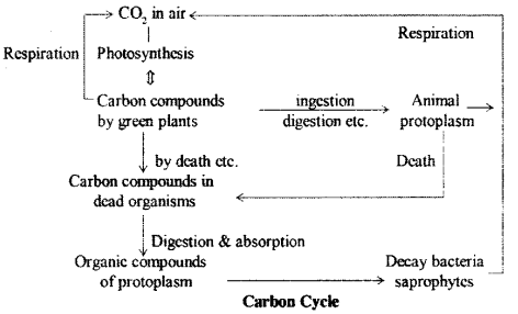 RBSE Solutions for Class 9 Science Chapter 13 Environment.4