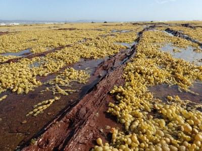 Fault line - Long Reef rock platform #marineexplorer