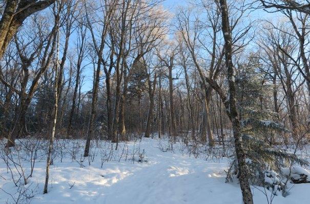 Starr King Trail Winter Hike Hardwoods