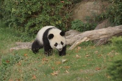1-year-old Yuan Meng (圆梦/圓夢) 2018-10-17