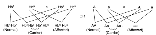 CBSE Sample Papers for Class 12 Biology Paper 2.1