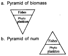 Plus Two Botany Model Question Papers Paper 2A14