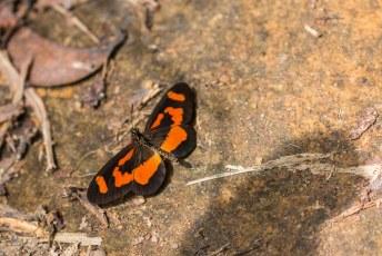 Het laatste wilde dier dat ik in Gabon te zien kreeg.