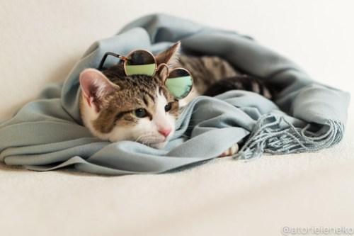 アトリエイエネコ Cat Photographer 45216756285_48ab3ac209 1日1猫!おおさかねこ倶楽部 里活中のカイくん♪ 1日1猫!  里親募集 茶トラ 猫写真 猫カフェ 猫 子猫 写真 保護猫カフェ 保護猫 ハチワレ ニャンとぴあ サビ猫 キジ猫 カメラ おおさかねこ倶楽部 Kitten Cute cat