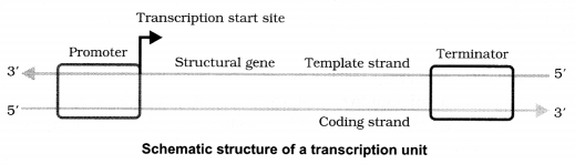 CBSE Sample Papers for Class 12 Biology Paper 4.7