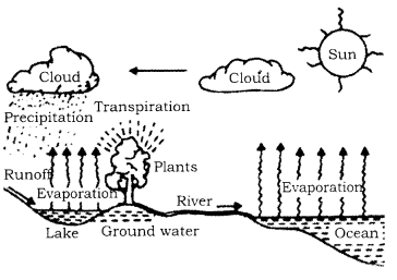 RBSE Solutions for Class 9 Science Chapter 13 Environment.2