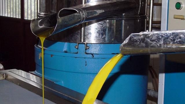 Κάμωμα της ελιάς (ελαιοτριβείο οικ. Ανδρέα Κατωπόδη, Καρυά)