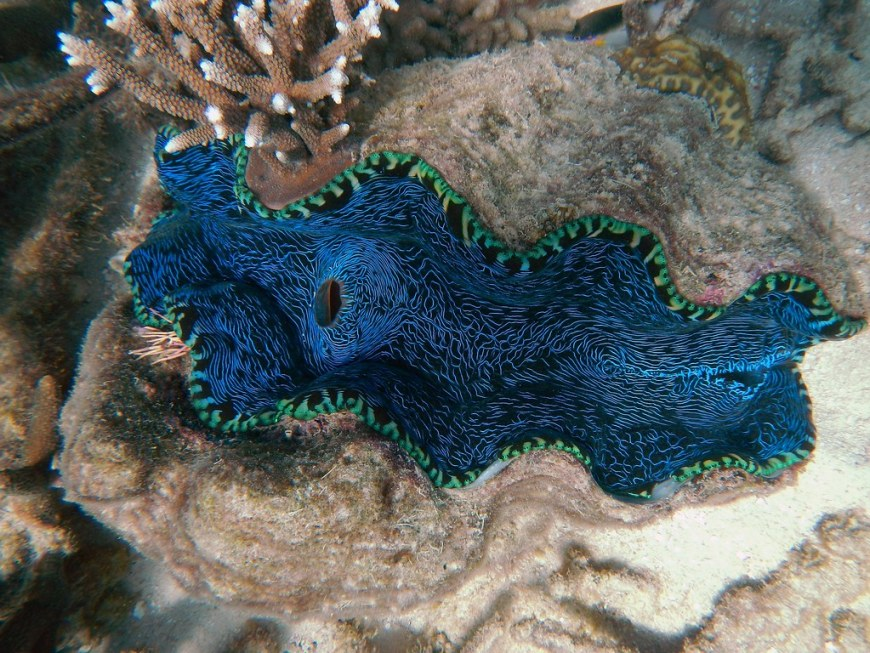 clam-170560_1920