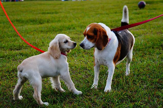 散歩のマナーを守ってゆっくり他の犬に近づく犬
