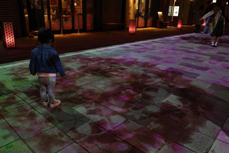 nihonbashi β Sakura carpet 02