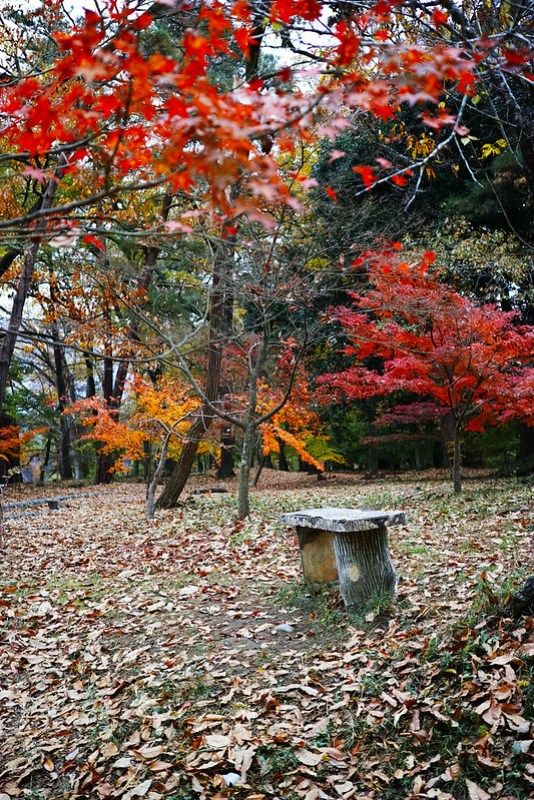 autumn colored leaves Tsukinoishi Momiji Park 02