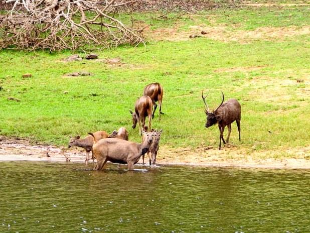 Parque Nacional de Periyar
