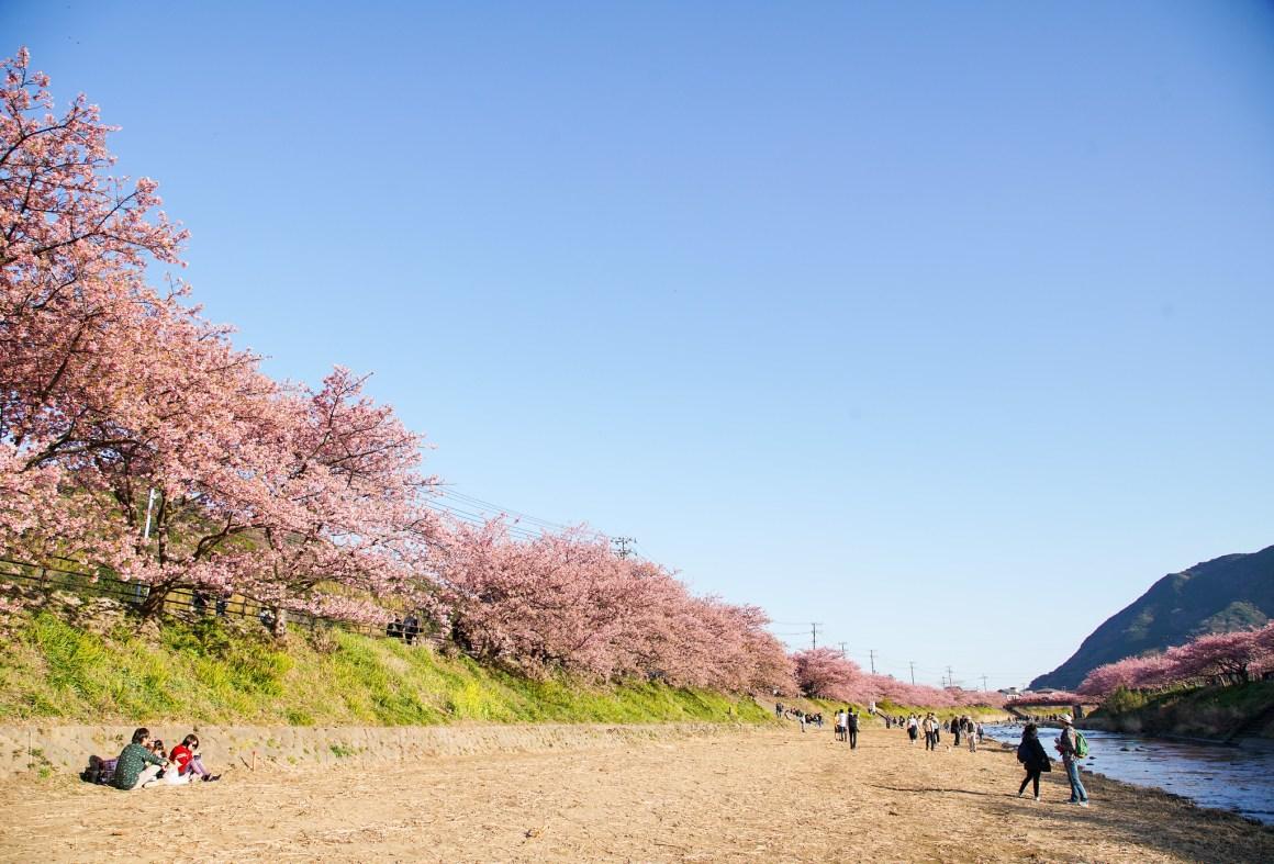 2018 Tokyo Sakura EDIT-375