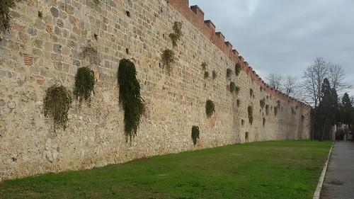 Pisa's Walls