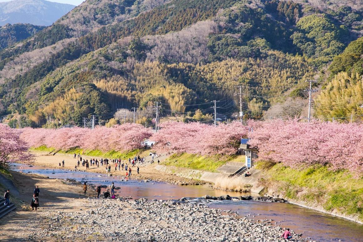 2018 Tokyo Sakura EDIT-360