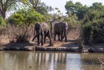 Puur toevallig vonden we ineens een waterhole, kwamen er ook nog twee Dumbo's aanlopen om een potje te gaan zuipen.
