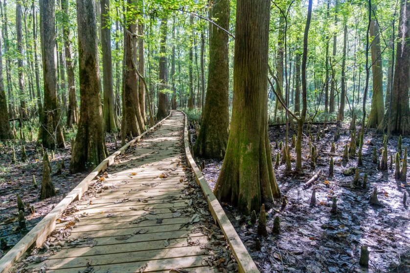 The Boardwalk Trail at Congaree National Park, South Carolina, Oct. 3, 2018.