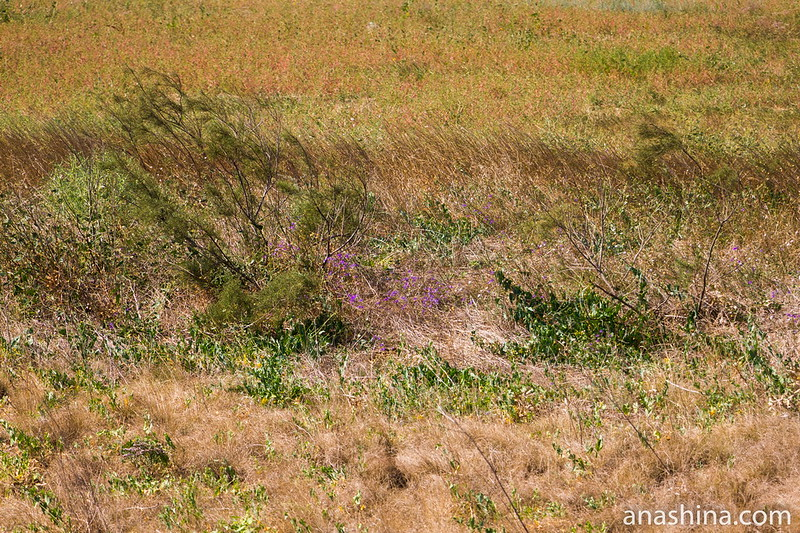 Степная растительность, Крым
