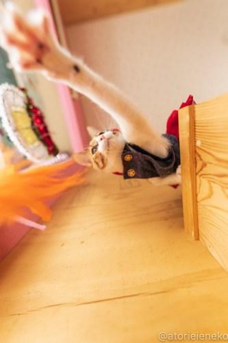 アトリエイエネコ Cat Photographer 46078190292_2ff4f85c91 1日1猫!おおさかねこ倶楽部 里活中のネールちゃん♪ 1日1猫!  里親募集 茶トラ 猫写真 猫カフェ 猫 子猫 写真 保護猫カフェ 保護猫 ハチワレ ニャンとぴあ サビ猫 キジ猫 カメラ おおさかねこ倶楽部 photo Kitten Cute cat