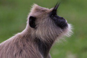 oftewel de ruud lubbers apen