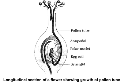 CBSE Sample Papers for Class 12 Biology Paper 4.11