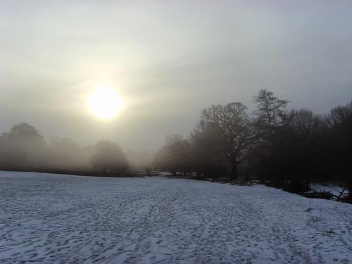 Richmond Park, morning
