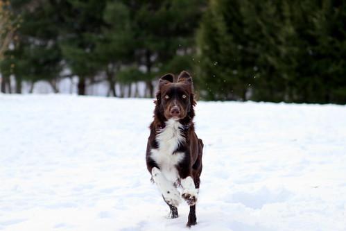 Stella snow