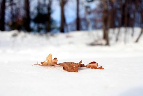 Stark Leaf