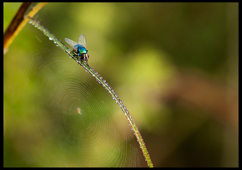 Fly by Sushil