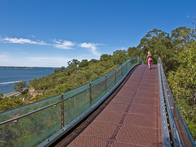 Aerial walkway in King's Park