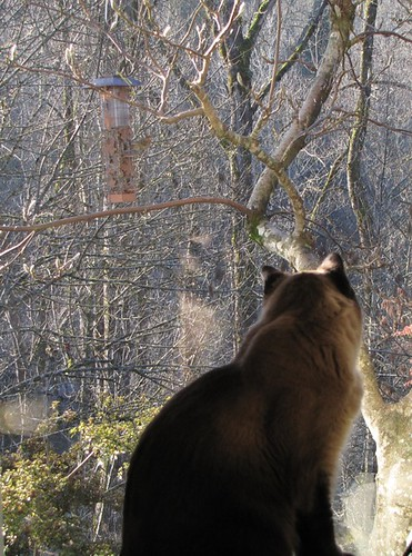 Sky the cat helping me with the New Years Day bird feeder count  :-)
