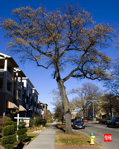 D80-ORF_ColonialAve01-2010_12-23B