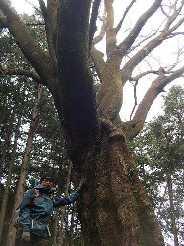 巨樹, 三室山トレッキング(奥多摩)