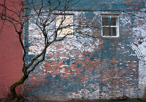 Tree & Old Brick