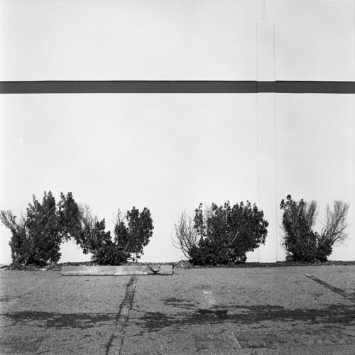 four shrubs