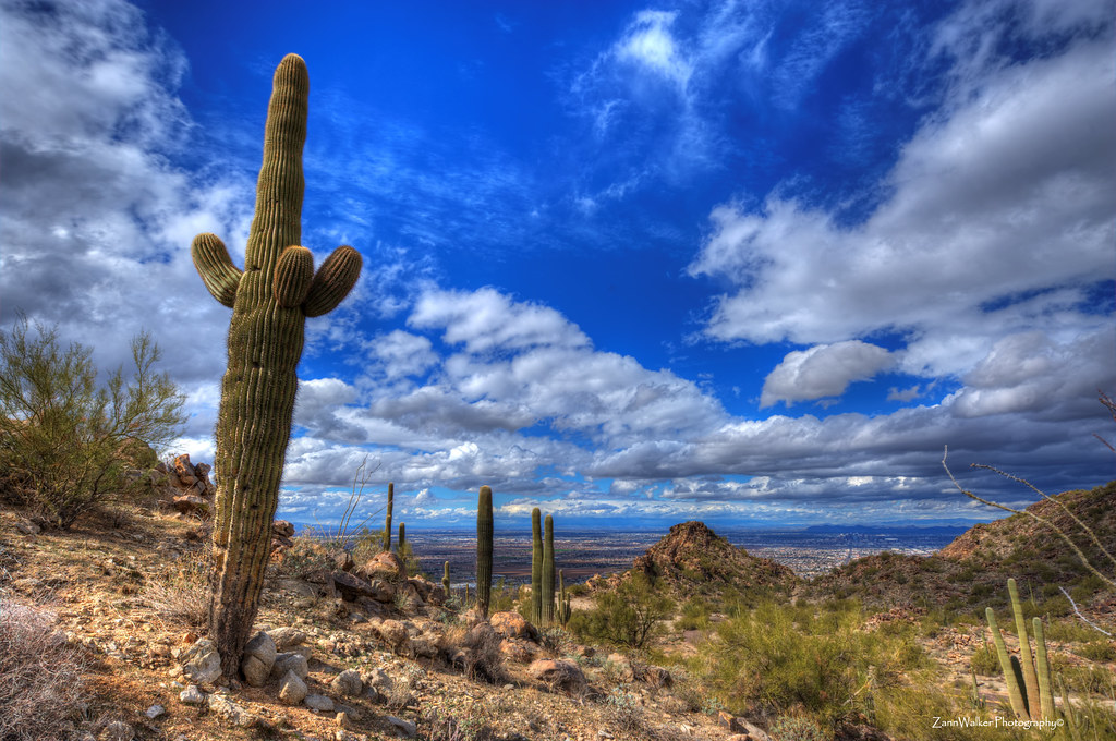 Saguaro and Big Sky