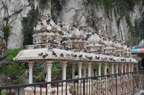201102180793_shrine-roof-pigeons