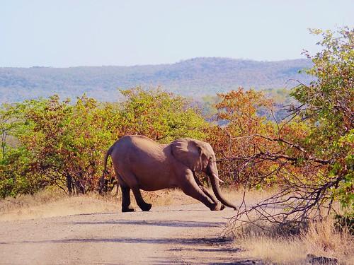 Stretching Elelphant