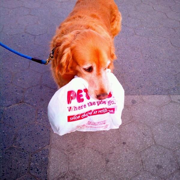Dog messenger
