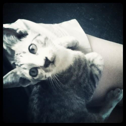 i found a kitten!