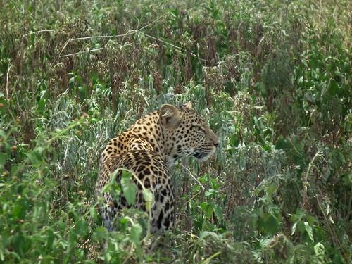 Ngorongoro Conservation Area - Tanzanie 2011 (87)