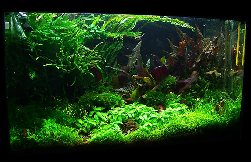 14 Feb 1 - 60l Aquascape