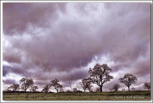 Almendros poco antes de la lluvia by dedaimiel