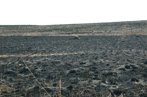 March 2011 post-burn