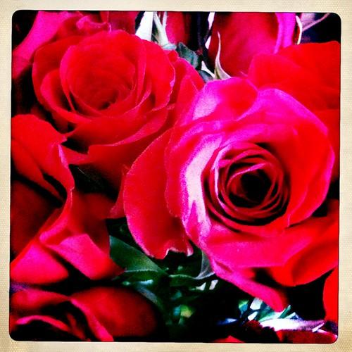 Valentine's Roses #1