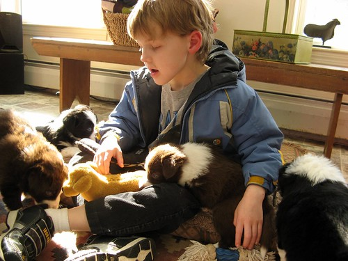 1490 J in a puppy pile
