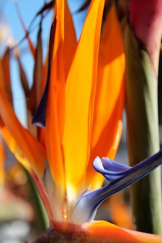 Flower-Valetta