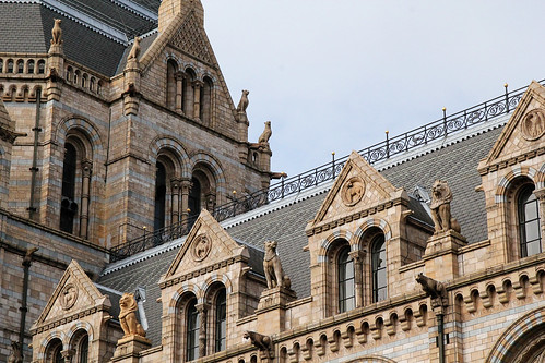 Roof-Natural-History-Museum
