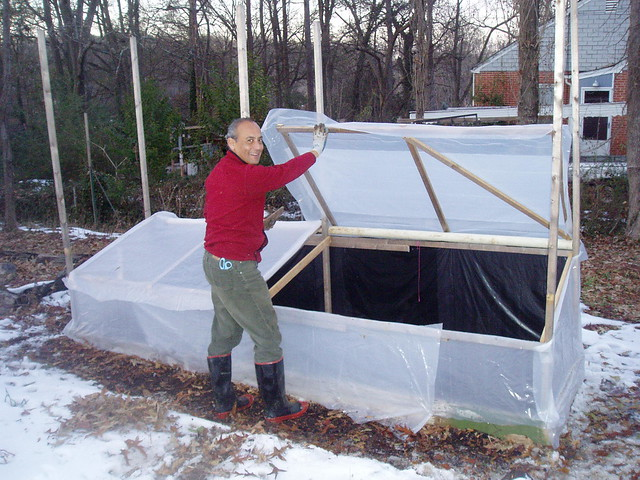 francisco and cold frame open lotus garden