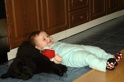 dog baby pillow (Photo: Honza Soukup on Flickr)